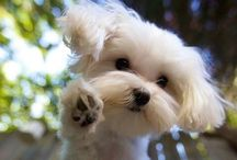 Dogs / Het allerleukste hondje....