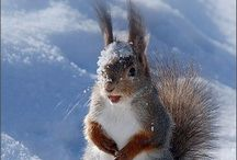 Animals - Squirrels 2