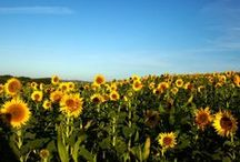 Discover Gascony / Land of the famed D'Artagnan, a rural department turned towards agriculture and the preservation of nature