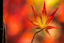 Another Autumn / A collection of fall themes / by Judy Koffler