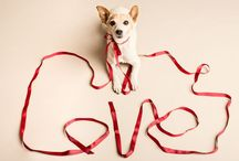 Furry Festivities / #animals #dog #cat #pet #valentines #birthday #celebrations