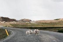 Iceland / Iceland - Giulia De Marchi