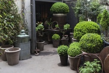Garden + Landscape