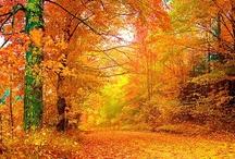 I miss fall!