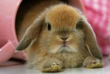 What's Up Doc? / Easter's coming - what better reason for pinning the cutest wabbits?