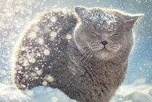 Winter Cat