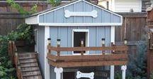 dog house / kutyaházak és apple watch