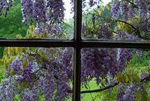 Purple, Plum, Violet