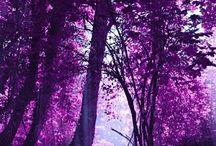 ♥'Purple'♥