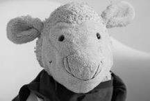 Hedi Life of a lamb / Hedi, the lamb. Follow her life in Hamburg and the rest of the world.