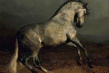 HORSES AZTECA