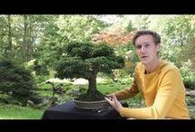 BONSAI / General information about Bonsai Trees