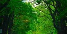 Green Verde Vert Groen