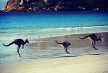 Australia / by Beinnc