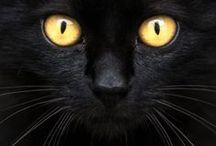 Cats - Gatti / Sono sempre così unici, così, incredibili, così felini, così….. Gatti ;-)