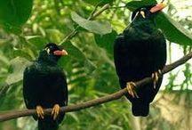 Merli - Blackbirds / Una scelta di foto e di canti di questo piccolo-grandissimo volatile stupendamente primaverile