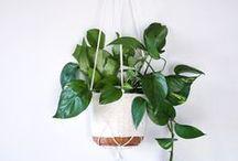 Urban Gardening / Urban gardening ideas, DIY activities, decoration