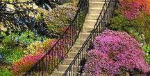 Bridge, Foot-bridge, Stairs...