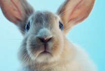 Bunny Obsession / Everything Rabbit related!!