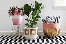 Home Decor Solutions / Home decor. Everything I want to put in my house.  / by Laila @Front Row Mama