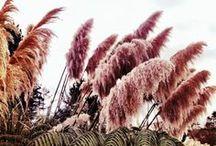 flora / by Carol Elaine Johns