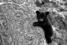fauna / by Carol Elaine Johns
