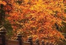 *Fall Splendor* / Who doesn't like this time of year....it's comforting!