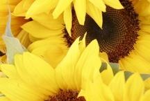 E vejo Flores em você ... ♪ / by Nana Pinho