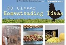 Homesteading today-tricks & tips for city & country folks / HOME … a way of life. All things HOMEsteading, HOMEkeeping, HOMEschooling, and HOMEindustry. www.MollyGreen.com  / by Molly Green Magazine