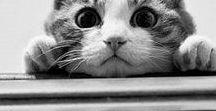 Cats / ❤