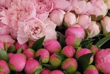 Pink & more Pink / ... and roses!! I love the pink roses :3