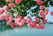 Beautiful flowers & Landscapes