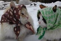 Winter sfeer / winter