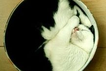 """Neko/Cats / """"There are no ordinary cats."""" (Colette)  / by mirei"""