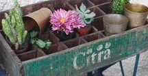 + garden inspo