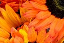 Autumn / Fall flowers, colors, decor and more for 2013...