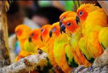 *Cute animals*