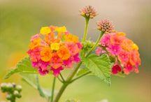 Garden/Yard/Houseplants / General gardening / by Gail