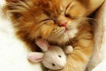 Cute animals :) (and quite a lot kittens)