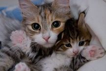 Kediler / kediler