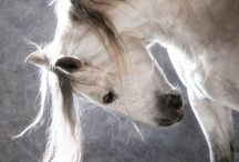 Horses / So wild but tame