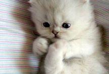 So cute / So cute it will stun