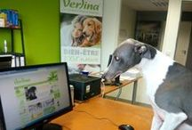 La mascotte Verlina ! / Vous allez adorer nos petites mascottes #chats #chiens ! Elles travaillent dur pour vous proposer les meilleurs produits sur http://www.verlina.com :)