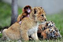 Une incroyable amitié / Ils ne sont pas de la même espèce et pourtant ils sont inséparables !