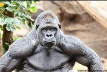 Les plus belles photos d'animaux / Découvrez des photos saisissantes et spectaculaires d'#animaux