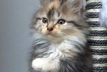 Si petits et si mignons ! / Découvrez les plus belles et les plus drôles photos de #chatons #chiots