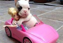 Humour - Animaux / Les photos des animaux les plus drôles sont ici !