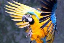 Oiseaux & Co / Découvrez dans ce tableau, de jolies photos d'oiseaux