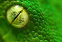Attention serpents ! / Découvrez les plus belles photos de serpents dans ce tableau et des produits pour les éloigner de vos habitations... Ne prenez pas de risques inutiles !