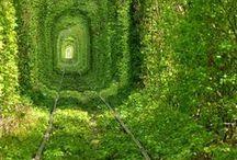 La Nature reprend ses droits / Découvrez des lieux abandonnés par l'Homme où la Nature a repris ses droits
